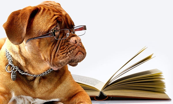 therapy dog with glasses and a book