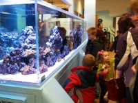 patrons viewing Phyllis Donner Aquarium
